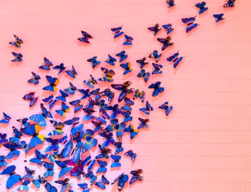 Need an Organizational Transformation?